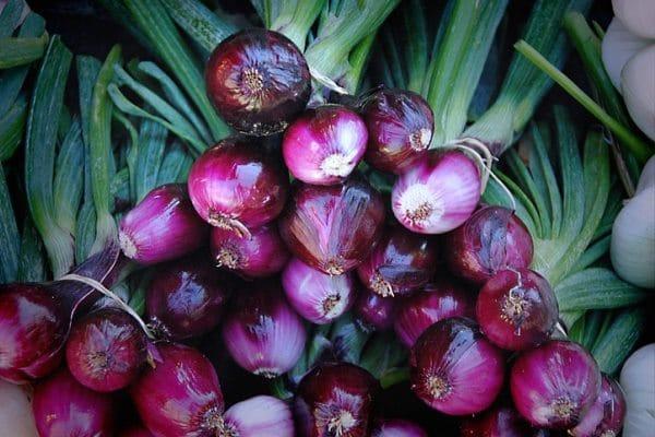 cara budidaya bawang merah di pot polybag dataran tinggi