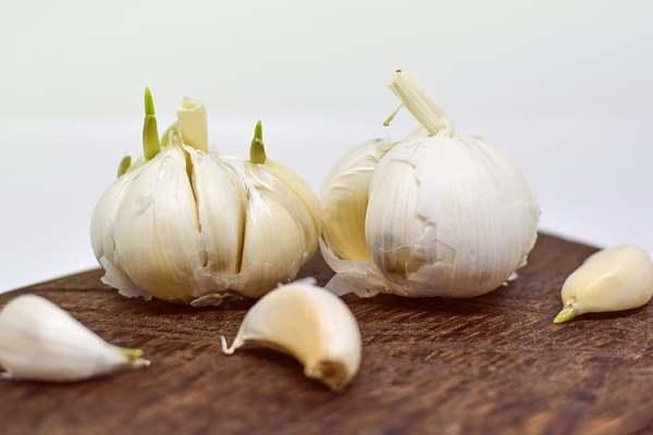 cara budidaya bawang putih dari awal di polybag dataran tinggi
