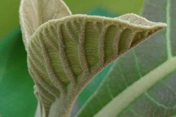 cara budidaya pohon jati agar cepat besar