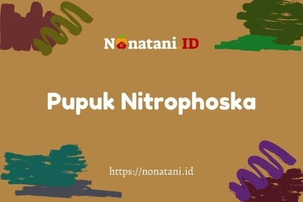 pupuk nitrophoska