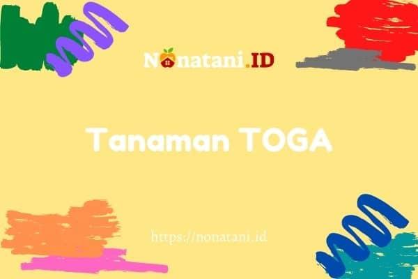 tanaman toga
