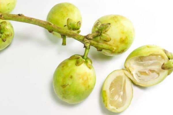 cara budidaya buah duku agar cepat berbuah