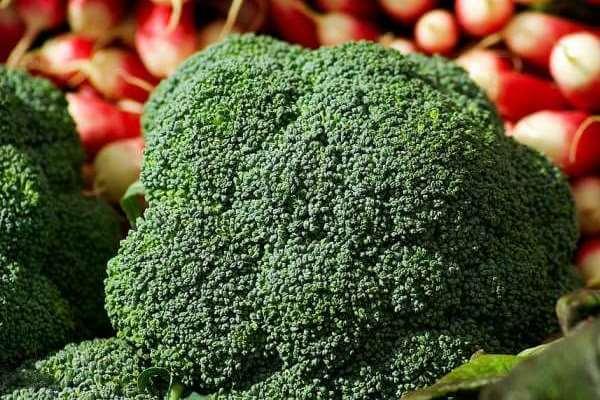 cara budidaya brokoli di pot dan polybag agar cepat panen