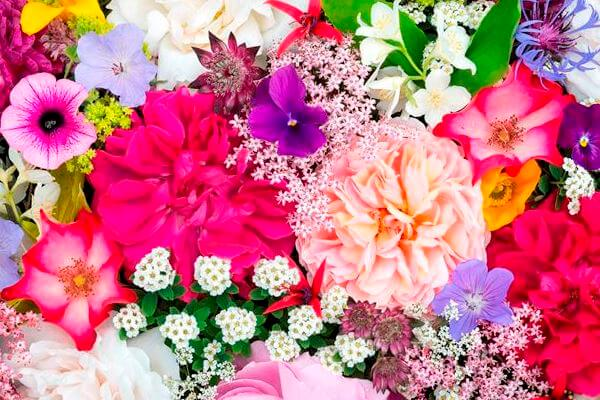 pupuk bunga