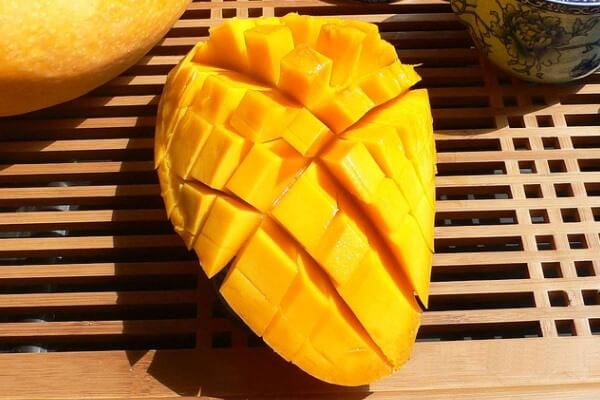 cara budidaya buah mangga