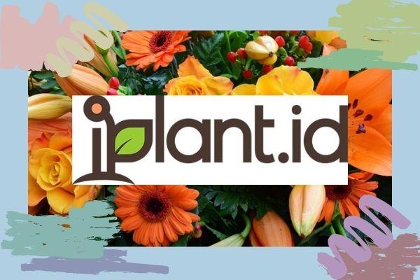 iplant toko tanaman hias online
